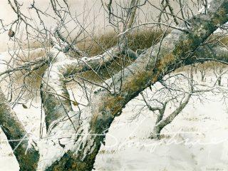 Winter Ballet